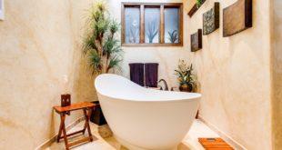 Pflanze für Badezimmer